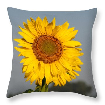Sunflower At Attention Throw Pillow