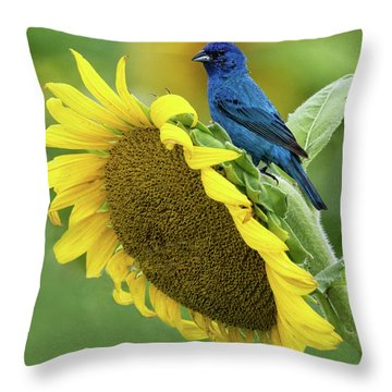 Sunflower Blue Throw Pillow