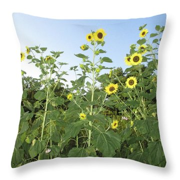 Sunflower Delight Throw Pillow by Charlotte Gray