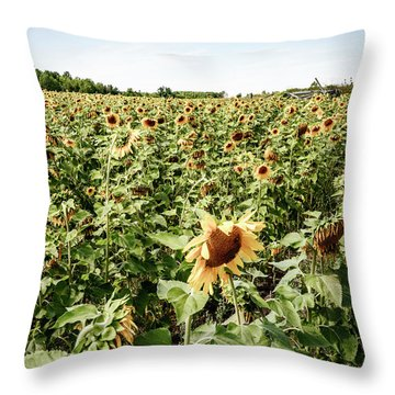 Throw Pillow featuring the photograph Sunflower Field by Alexey Stiop