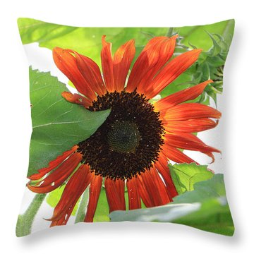 Sunflower In The Afternoon Throw Pillow