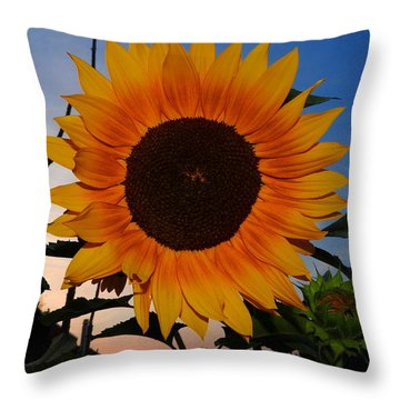 Sunflower In The Evening Throw Pillow