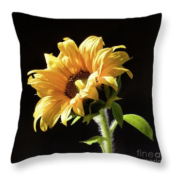Sunflower Isloated On Black Throw Pillow