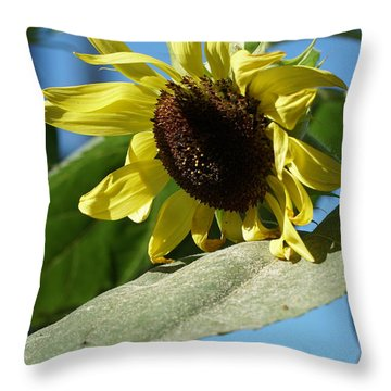 Sunflower, Lemon Queen, With Pollen Throw Pillow