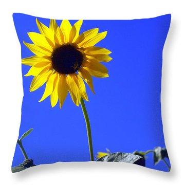 Sunflower Throw Pillow by Marty Koch