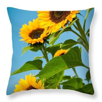 Sunflower Morning Throw Pillow by Debbie Karnes