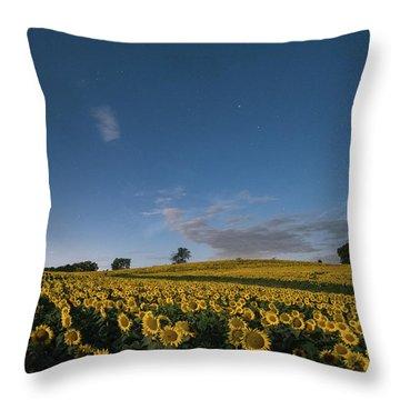 Sunflower Nights Throw Pillow