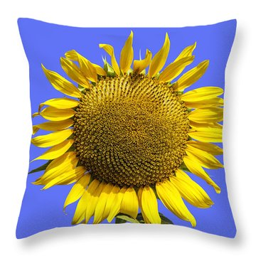 Sunflower On Blue Throw Pillow