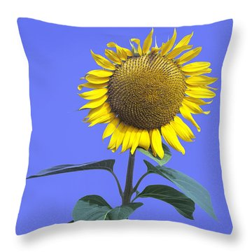 Sunflower On Blue Too Throw Pillow