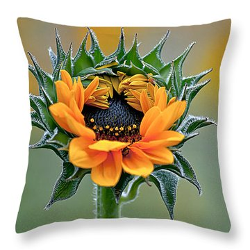 Sunflower Opens Throw Pillow by Emerald Studio Photography