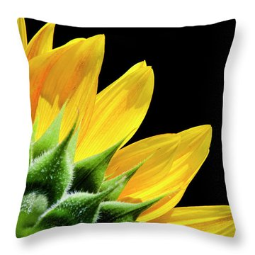 Throw Pillow featuring the photograph Sunflower Petals by Christina Rollo