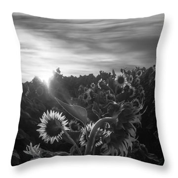 Sunflower Rise In Black And White Throw Pillow