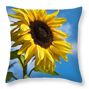 Sunflower Throw Pillow by Scott Carruthers