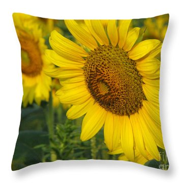 Sunflower Series Throw Pillow by Amanda Barcon