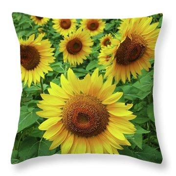 Sunflower Time Throw Pillow