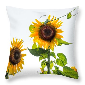 Sunflower With Vine Throw Pillow