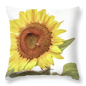 Throw Pillow featuring the photograph Sunflowers 10 by Andrea Anderegg