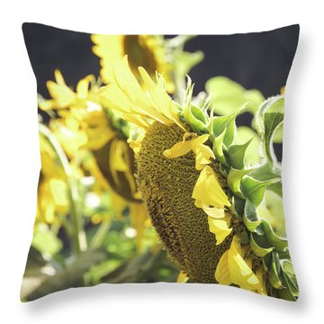 Throw Pillow featuring the photograph Sunflowers 4 by Andrea Anderegg