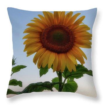 Sunflowers 4 Throw Pillow
