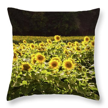 Throw Pillow featuring the photograph  Sunflowers 5 by Andrea Anderegg