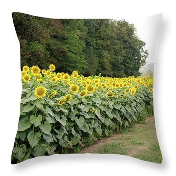 Throw Pillow featuring the photograph  Sunflowers 6 by Andrea Anderegg