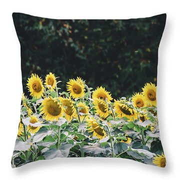 Throw Pillow featuring the photograph Sunflowers 7 by Andrea Anderegg