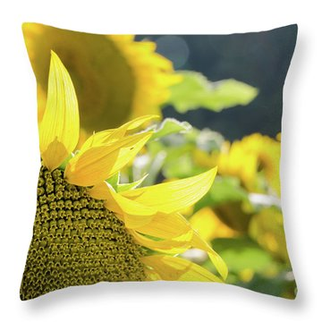Throw Pillow featuring the photograph  Sunflowers 8 by Andrea Anderegg