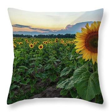 Sunflowers 8 Throw Pillow