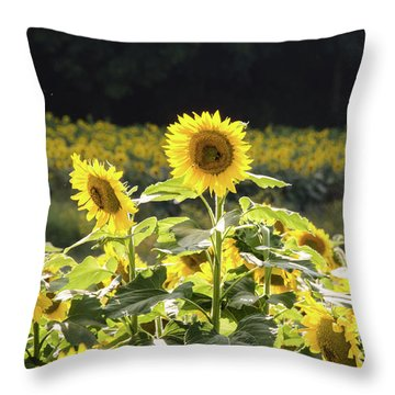 Throw Pillow featuring the photograph Sunflowers 9 by Andrea Anderegg