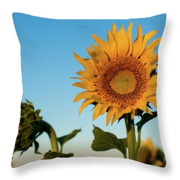 Sunflowers At Sunrise 1 Throw Pillow