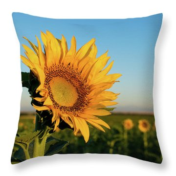 Sunflowers At Sunrise 2 Throw Pillow