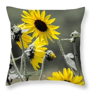 Sunflowers Colorized Throw Pillow