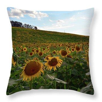 Sunflowers Fields  Throw Pillow