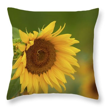 Sunflowers In Field Throw Pillow