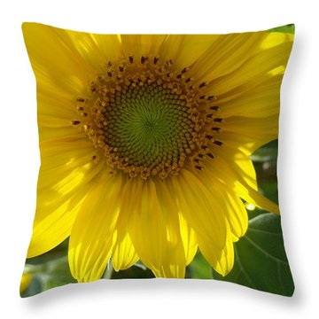 Sunflowers-just Bloomed Throw Pillow