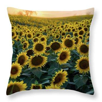 Sunflowers V Throw Pillow