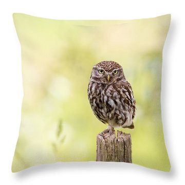 Sunken In Thoughts - Staring Little Owl Throw Pillow by Roeselien Raimond