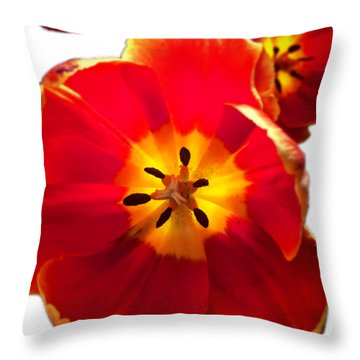 Sunkissed Tulips Throw Pillow