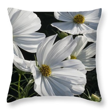 Sunlight And White Cosmos Throw Pillow