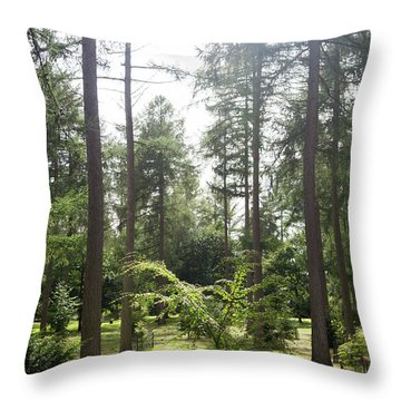 Throw Pillow featuring the photograph Sunlight Through The Trees by Scott Lyons