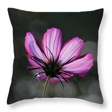 Sunlit Beauty Throw Pillow