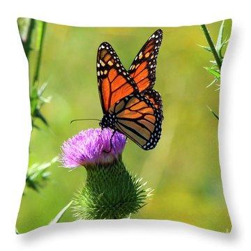 Sunlit Monarch  Throw Pillow
