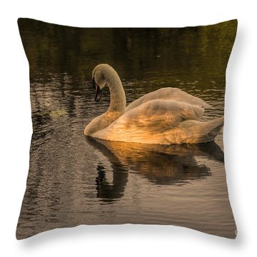 Sunlit Mute Swan  Throw Pillow
