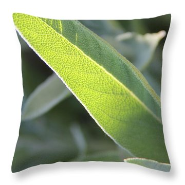 Throw Pillow featuring the photograph Sunlit Sage Leaf by Elizabeth Sullivan