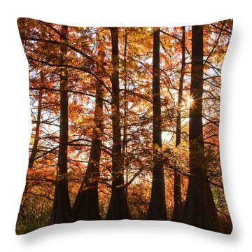 Throw Pillow featuring the photograph Sunlit Trees At Lake Murray by Tamyra Ayles