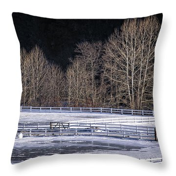 Sunlit Trees Throw Pillow by Tom Singleton