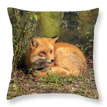 Sunning Fox Throw Pillow