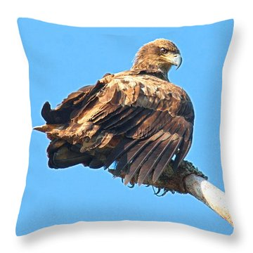 Throw Pillow featuring the photograph Sunning Out On A Limb by Debbie Stahre