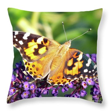 Sunning Painted Lady Throw Pillow