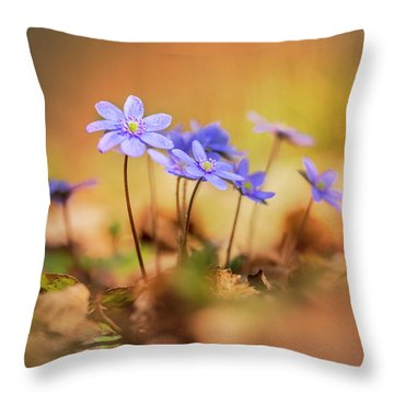Throw Pillow featuring the photograph Sunny Afternoon With Liverworts by Jaroslaw Blaminsky